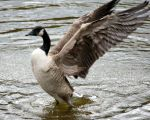 Canada Goose 7490 Ultimate Stretch by GhostInThePines