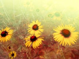 Yellow Echinacea by Tackon