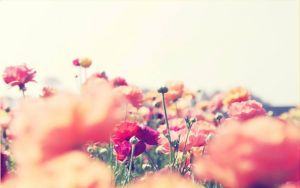 wallpaper flowers by Analaurasam