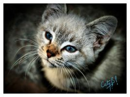 Its me Cat - HDR by Cj-Caty