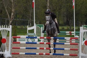 Grey Horse - Show Jumping Stock 8.22 by MagicLecktra