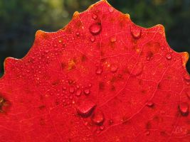 Red Autumn by JoannaMoory