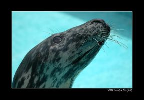 Grey Seal 2 by grugster
