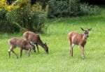 Mamma and her twins, Getting older. by sweatangel