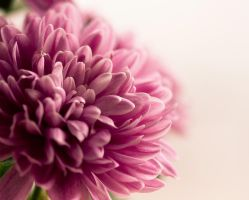 a touch of pink by Jessiii1986
