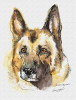 German-Shepherd-color by Trungmaster5