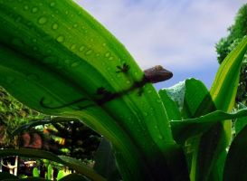 Gecko on a wet leaf by geckogr