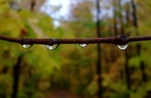 Droplets by Canada-Guy-Eh