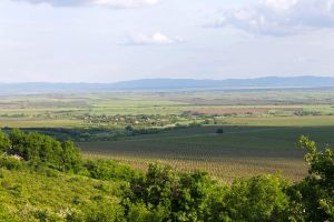 Shadows Over Vineyard by Anonimus79