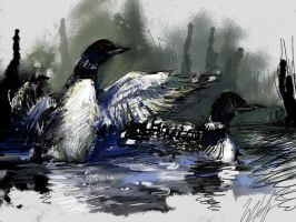 Common Loons by TyStaDye
