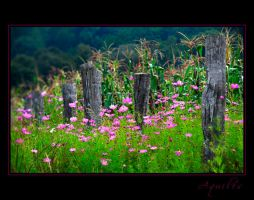 Along the fence ... by Aquilesfotografo
