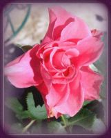 Rose of Cimmarron by thedirestraits