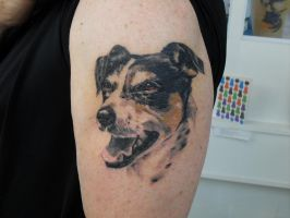 The dog (healed) by facepolution