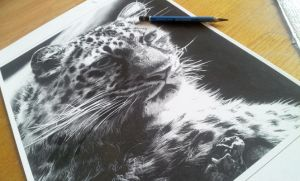 Snow Leopard Limited Edition Giclee Print by chandito
