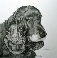 Commission - Cocker Spaniel 'Suki' by Captured-In-Pencil