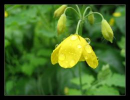 Yellow flower with droplets by Amanodel