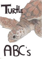 Turtle OwO by Pencil-Only