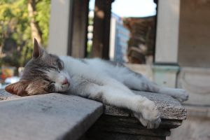 sleeping cat in the chaos of the city by trawellness