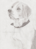 Beagle by Freedomfray