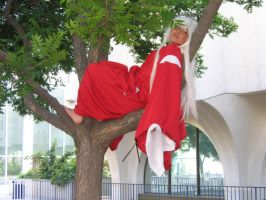 InuYasha up a Tree by Stormfalcon