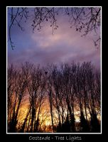 Sunset behind the branches by lux69aeterna