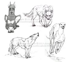 Canine sketches by AnnaCStansfield