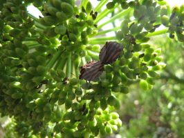 Striped Sheild Bugs by Maltese-Naturalist