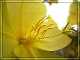 yellow by Paul774
