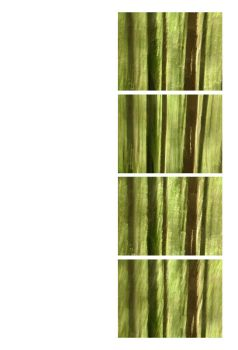 Four lined trees by FiLH