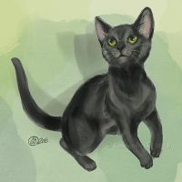 Adorable Kitty - SpeedPaint by GoldenDruid