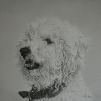 Commission - Cockapoo 'Rossi' by Captured-In-Pencil