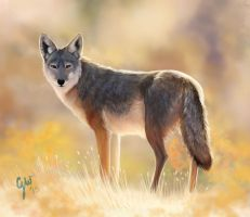 Desert Coyote by vixentheangryfox