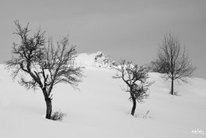 trees and summit by rdalpes