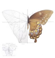 Butterfly Study by CathyStephens