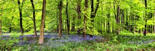 Wyre Forest by Capturing-the-Light