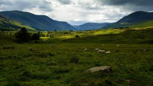 Glen Cova, Angus by Greg-McKinnon
