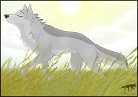 AT: Afternoon Sun by AriaDog