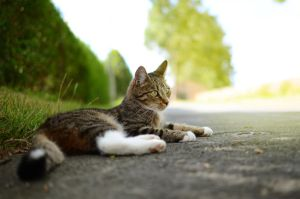 cat by sys66