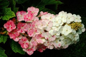 White to Pink by EarthHart