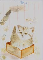 Cat in a Box by OrchidOwl