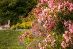Lolsi's Rose Garden by brijome