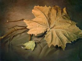 Dead Leaf Still Life by TheArtfulMegalodon