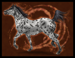 Appaloosa trot by Janaita