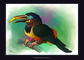 Chestnut Eared Aracari by ObsidianGecko