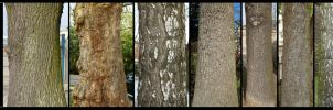 Bark Texture Pack 2 by AGF81