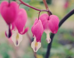bleeding heart by Unassailably