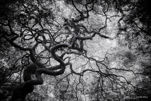labyrinthine by NWunseen