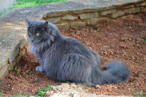 Grey cat 2 by Yavanna-stock