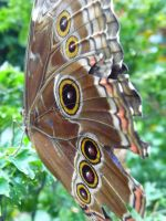 Butterfly 16 by Niedec-STOCK