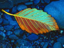 Golden Leaf by dsiegel